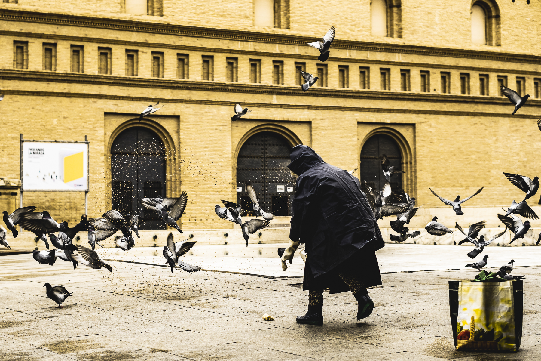 Señora alimenta palomas Plaza del Pilar